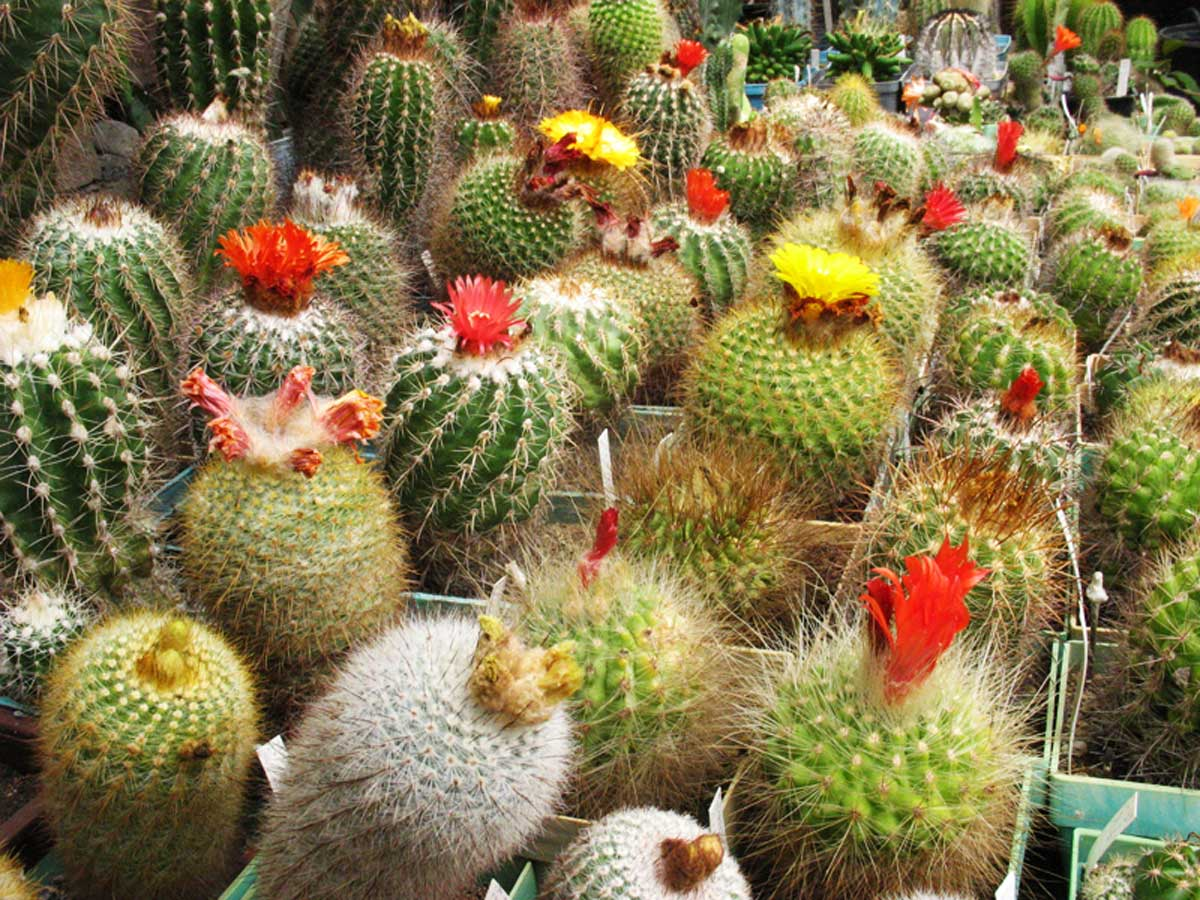 Ботаническа градина село Велика Странджа