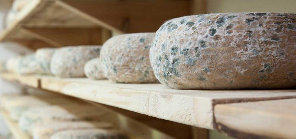 Зелено сирене
