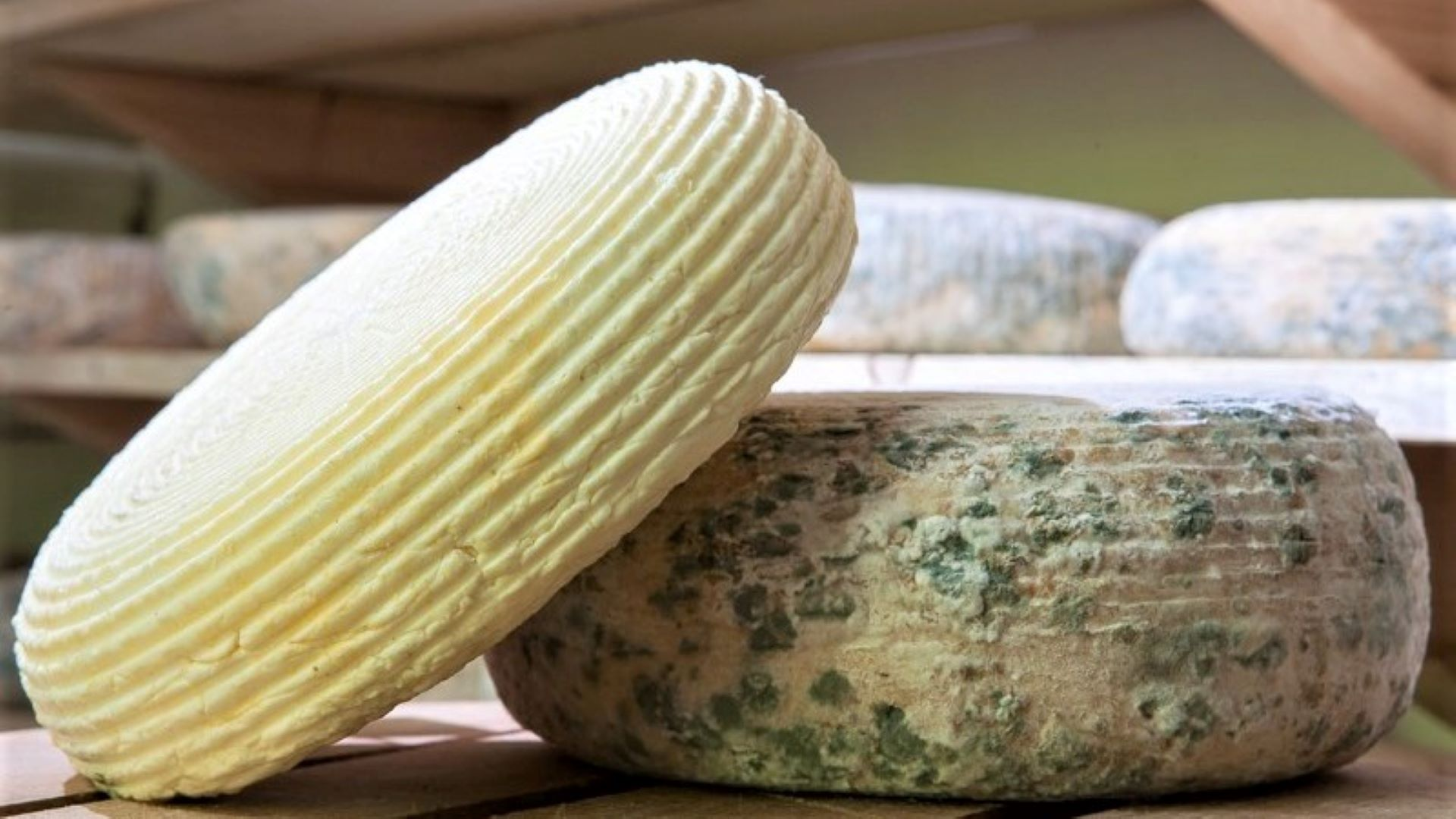 Зелено сирене от Черни Вит